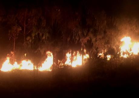 Cháy rừng trên núi Đại Bình