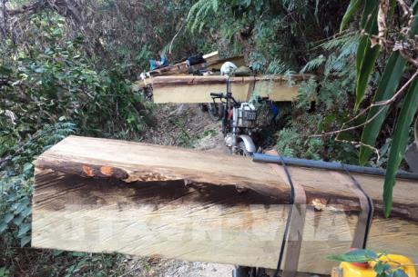 Kon Tum mở rộng điều tra vụ phá rừng Đăk Tô
