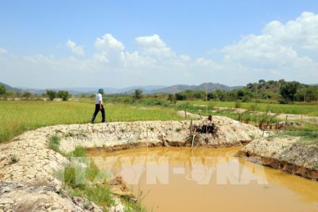 Lâm Đồng triển khai các giải pháp cấp bách khắc phục khô hạn