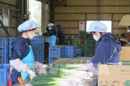 Việt Nam phối hợp chặt với Nhật Bản bảo đảm sức khỏe thực tập sinh