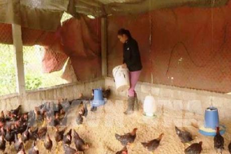 Xử lý dứt điểm các ổ dịch gia súc, gia cầm, không để lây lan, kéo dài