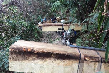 Kon Tum: Giao công an tỉnh điều tra vụ phá rừng ở Đăk Tô