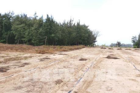 Thiếu nước, nhiều diện tích rừng phòng hộ ven biển ở Sóc Trăng chết khô