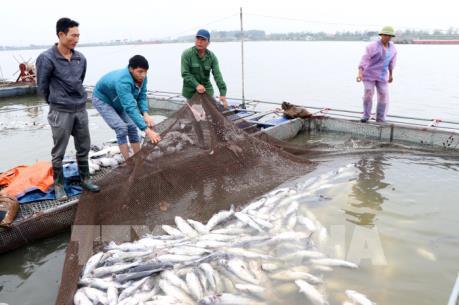 Nguyên nhân khiến hơn 100 tấn cá lồng chết trên sông Thái Bình