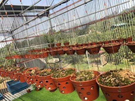 Lâm Đồng: Khởi tố vụ án vụ trộm vườn lan quý trị giá hơn 4 tỷ đồng