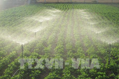Mô hình tưới nước tiết kiệm ứng phó với khô hạn
