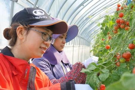 Nhật Bản thiếu 1.000 thực tập sinh nước ngoài trong ngành nông nghiệp