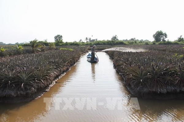 Từ ngày 26/3 - 6/4, các tỉnh ĐBSCL có thể tranh thủ lấy nước ngọt