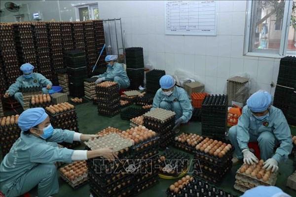 Dabaco tập trung mở rộng hệ thống phân phối