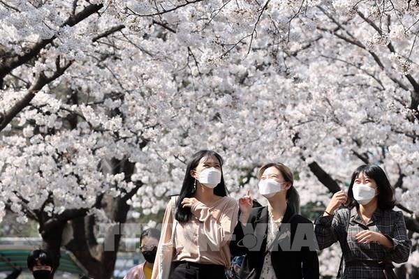 Tỷ lệ khỏi bệnh COVID-19 tại Hàn Quốc đạt trên 40%