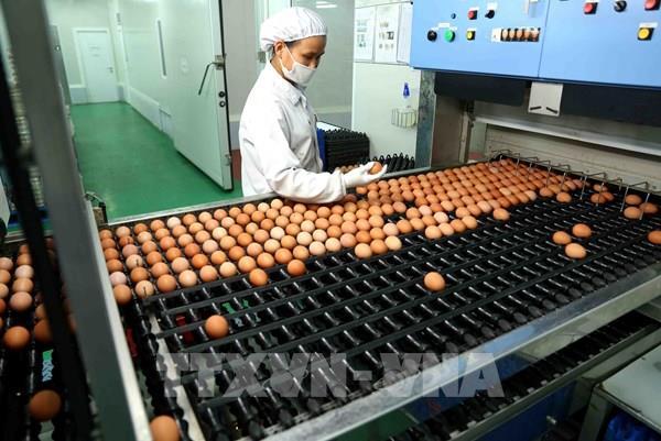 Thái Lan cấm xuất khẩu trứng gà trong 7 ngày để đáp ứng nhu cầu nội địa