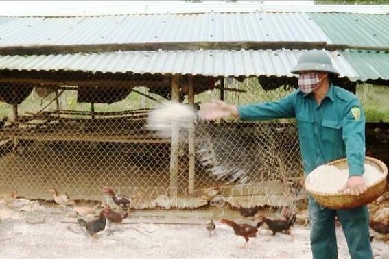 Thanh Hóa công bố hết dịch cúm gia cầm A/H5N6