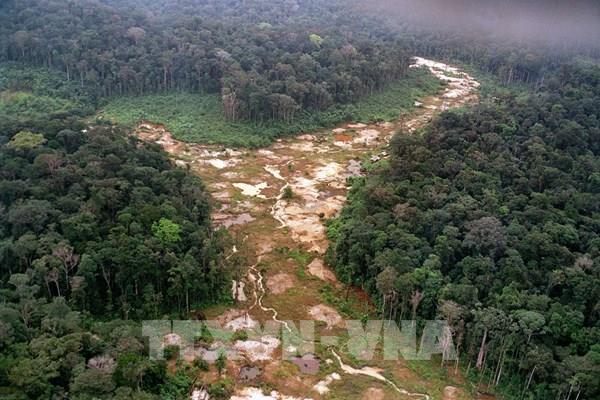 """Tương lai màu xám của """"lá phổi xanh"""" Amazon"""