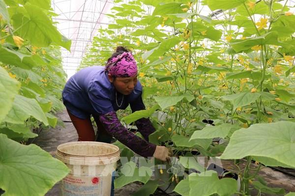 Bắc Ninh hút nguồn lực vào nông nghiệp công nghệ cao