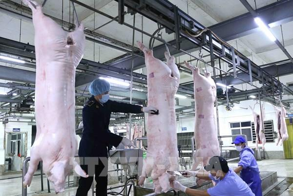 Doanh nghiệp cam kết đưa giá lợn về 70.000 đồng/kg