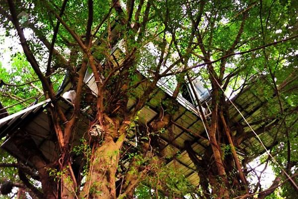 Tự cách ly cách bằng sống trên cây