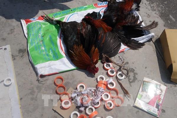 Bắt quả tang 9 đối tượng đá gà ăn tiền giữa mùa dịch COVID-19
