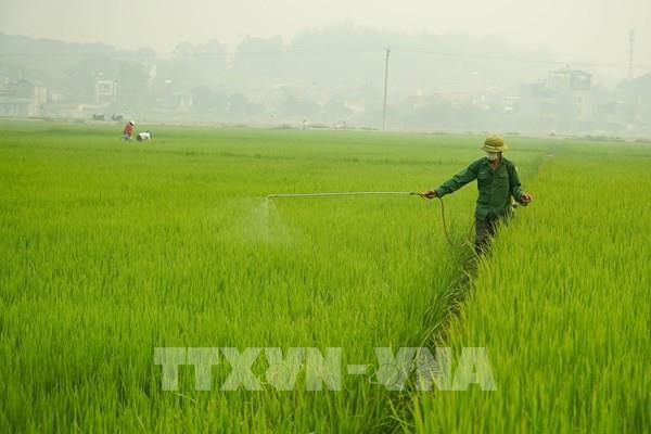 Bộ NN và PTNT ra chỉ thị phòng chống sinh vật gây hại lúa Đông Xuân