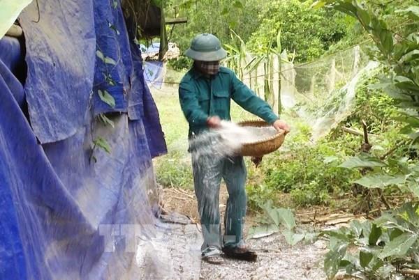 Tuyên Quang phát hiện ổ dịch cúm gia cầm đầu tiên