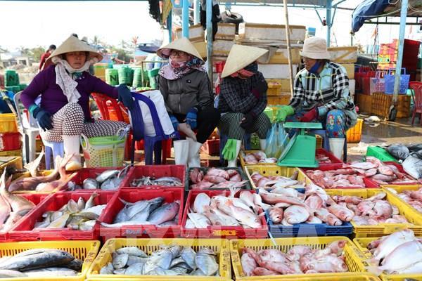 Cá rớt giá, thu không đủ chi, ngư dân vẫn kiên cường bám biển