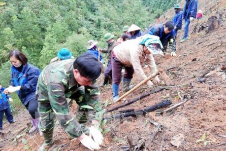 Khuyến cáo về trồng rừng vụ Xuân Hè