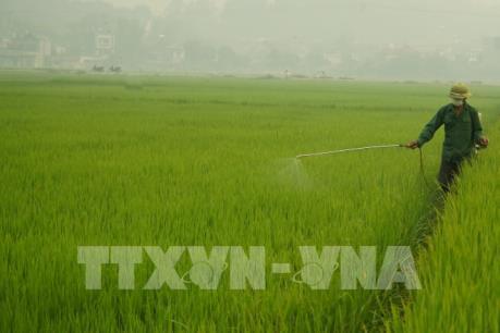 Theo dõi sát, cảnh báo kịp thời về dịch hại vụ Đông Xuân các tỉnh phía Bắc