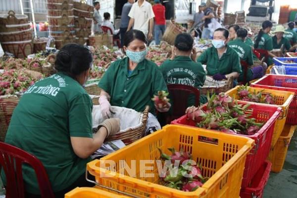 Thanh long ruột đỏ Việt Nam được đón nhận tại Australia