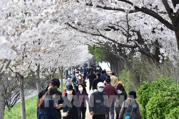 Hàn Quốc ghi nhận 116 ca dương tính khi đã có kết quả xét nghiệm âm tính