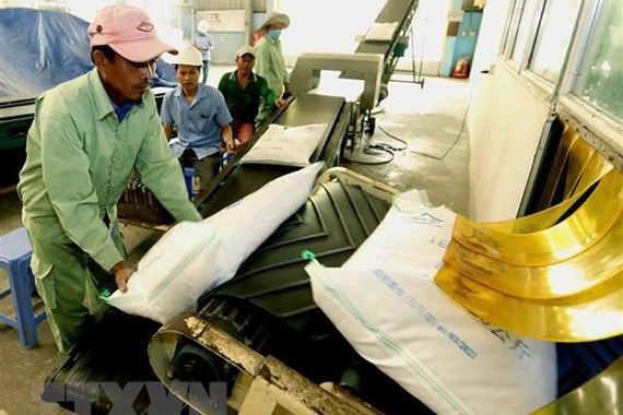 Doanh nghiệp kiến nghị Thủ tướng về bất cập trong khai hải quan xuất khẩu gạo