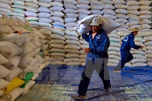 Giá gạo xuất khẩu của Việt Nam tăng lên trong tuần