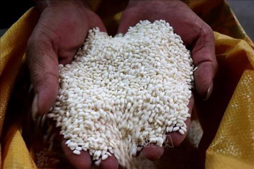 Bộ Nông nghiệp và Phát triển nông thôn đề xuất cho phép xuất khẩu gạo nếp