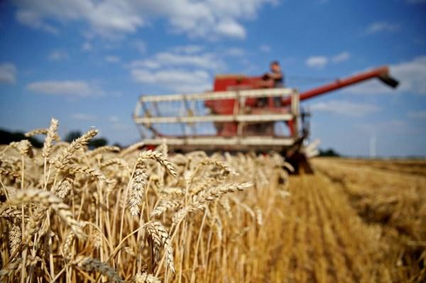 Giá các nông sản giao kỳ hạn của Mỹ đồng loạt giảm