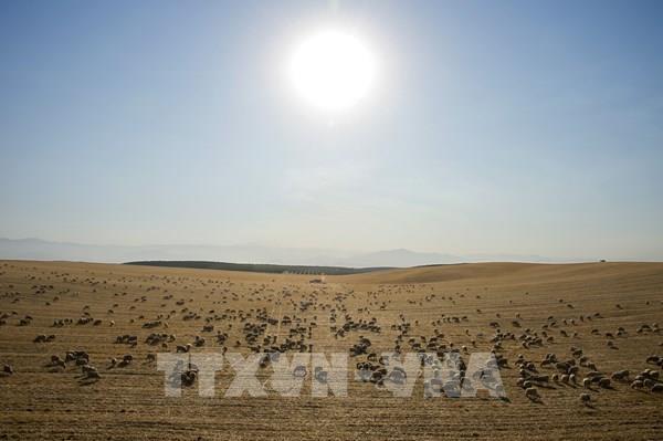 Cận cảnh khô hạn kỷ lục trong thiên niên kỷ qua ở miền Tây nước Mỹ