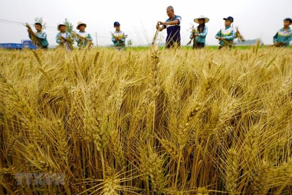 Ngành nông nghiệp Trung Quốc sẽ phát triển ổn định trong năm 2020