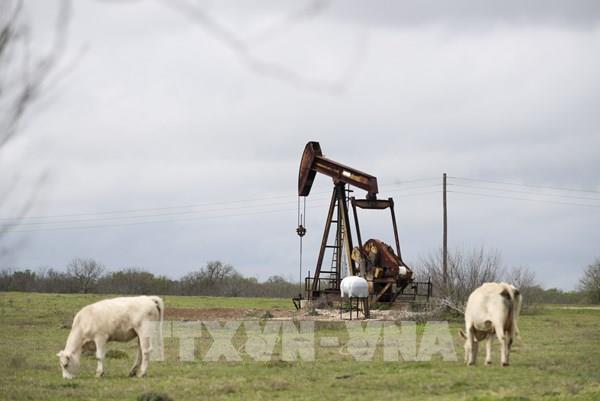 Giá dầu giảm tác động như thế nào tới kinh tế Mỹ?