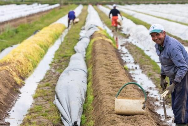 Đức tuyển dụng lao động thời vụ cho ngành nông nghiệp