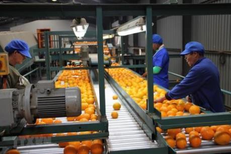 Ngành bán lẻ của Nam Phi chịu tổn thất kép do COVID-19