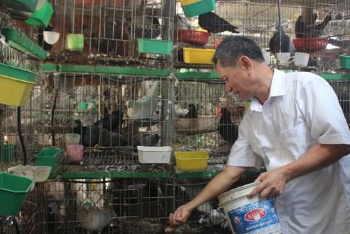 Thu lãi hàng trăm triệu đồng/năm nhờ nuôi bồ câu Pháp