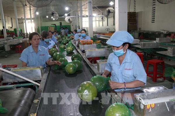 Thặng dư thương mại hàng nông, lâm, thủy sản 10 tháng đạt 7,9 tỷ USD