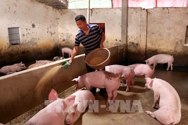 Lâm Đồng công bố hết dịch tả lợn châu Phi