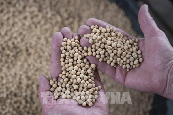 Chính phủ Mỹ sẽ thu mua 3 tỷ USD nông sản để hỗ trợ người nông dân