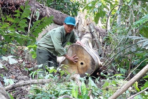 Khám nghiệm hiện trường, truy tìm thủ phạm vụ mở đường để phá rừng tại Phú Yên