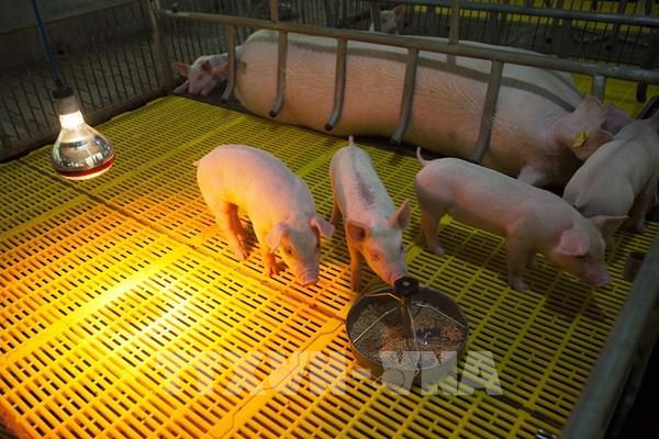 Bộ Tài chính đã cấp bổ sung kinh phí cho địa phương bị ảnh hưởng dịch tả lợn châu Phi