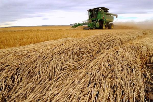 Phản ứng của Australia về quyết định áp thuế nông sản mới của Trung Quốc