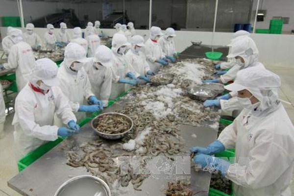 Bà Rịa-Vũng Tàu: Sớm đưa các cụm chế biến hải sản tập trung đi vào hoạt động