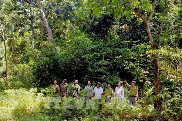 Đóng cửa rừng tự nhiên: Bài 1-Rừng được phục hồi và phát triển