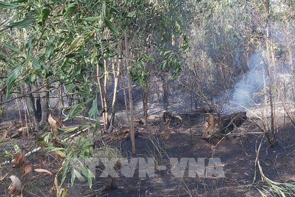 Cháy tại khu rừng keo sát sân bay Đà Nẵng
