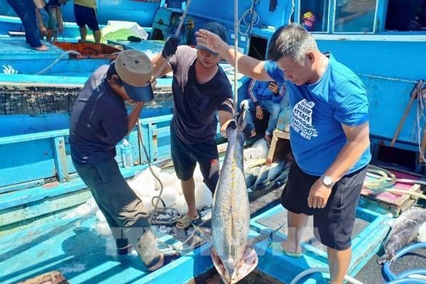 Thị trường xuất khẩu cá ngừ đại dương vẫn còn bất ổn