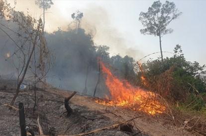 Kiên Giang: Cháy rừng ở huyện Hòn Đất đã được khống chế hoàn toàn