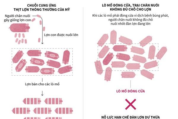 """""""Nút thắt cổ chai"""" trong chuỗi cung ứng thịt lợn tại Mỹ"""